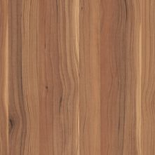 Sapwood